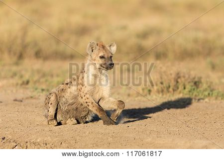 One Spotted Hyena In The Serengeti, Tanzania