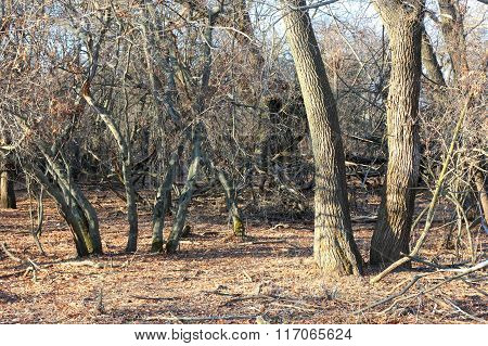 Dry trees in the autumn forest