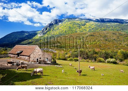 Mountains landscape,grazing cows on the farm.