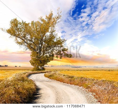 Tree and road landscape
