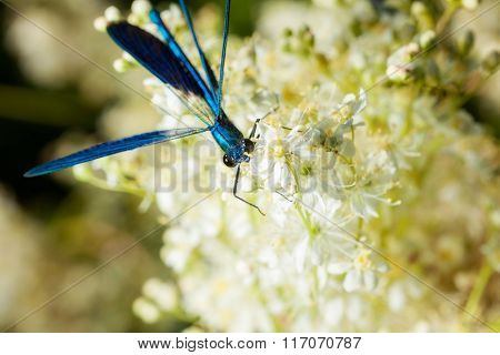beautiful dragonfly on a flower. macro