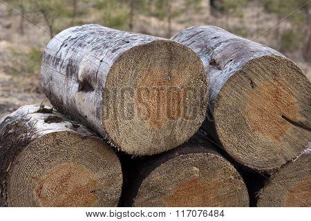 Stack Of Freshly Cut Firewood