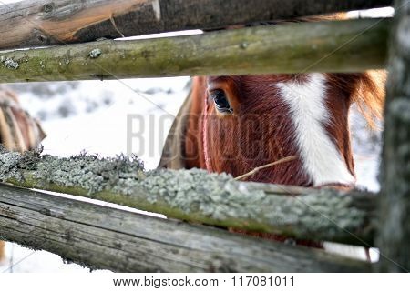 horse outdoor in winter