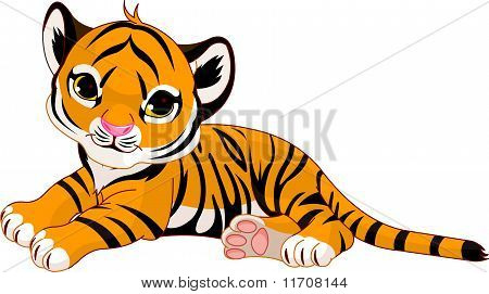 Little Tiger Cub Resting