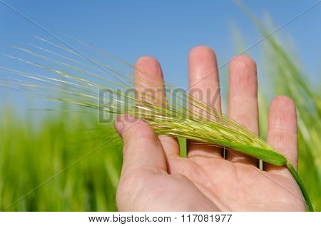 green spica in hand over field
