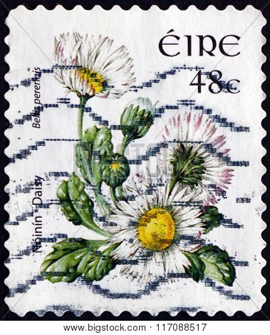 Postage Stamp Ireland 2004 Daisy, Flowering Plant