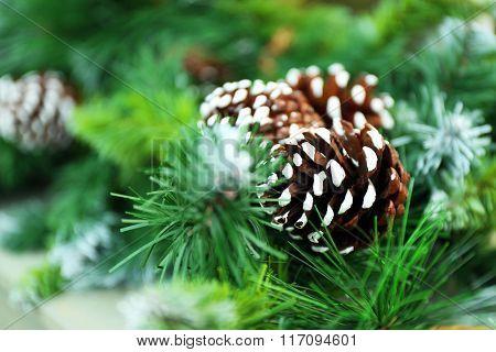Christmas fir tree with cone closeup