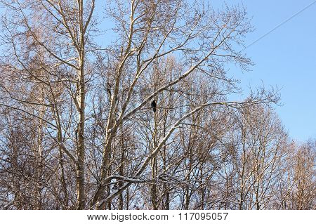 Bird On The Branches.