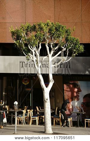 Trimana Grill Los Angeles