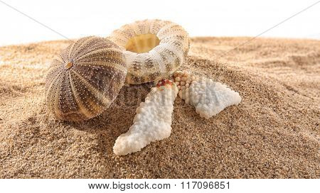 Sea shells on sand isolated on white background