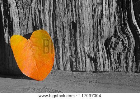 Autumn leaf on wooden textured background