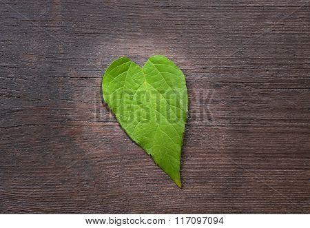 Green leaf on wooden background