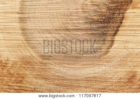 Wood round slice, macro