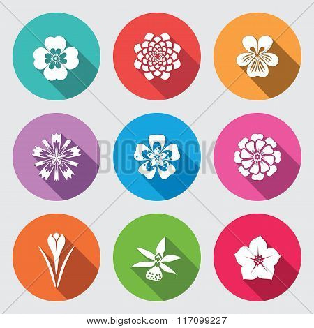 Botany flower set. Camomile, daisy, petunia, chrysanthemum, orchid, crocus, saffron, cornflower, dah