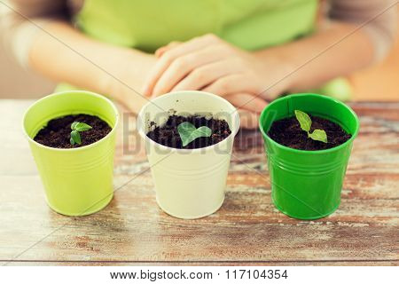 close up of sprouts in pots and gardener or woman