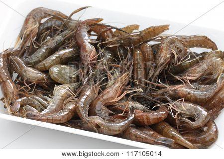 Macrobrachium nipponense, freshwater shrimp