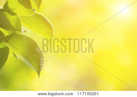 Green leaves with copyspace of beautiful bokeh background.