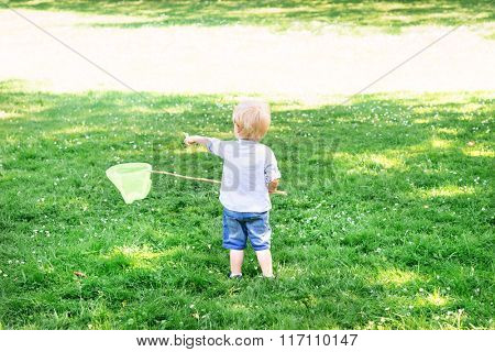 Little boy catching butterflies with scoop,