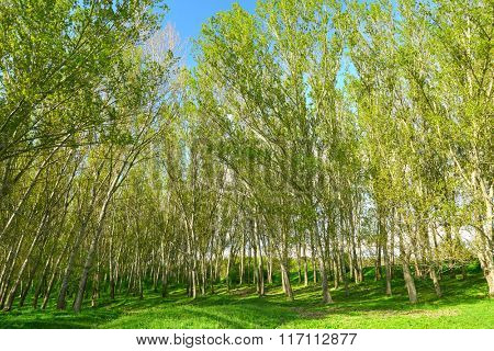 bright summer landscape, trees in forest