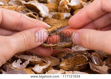 Hands Peeling Peanuts Among Shells On The Table