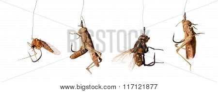 Set Of Baits On The Hook Isolated On White