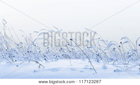 Beautiful Winter Snow Field