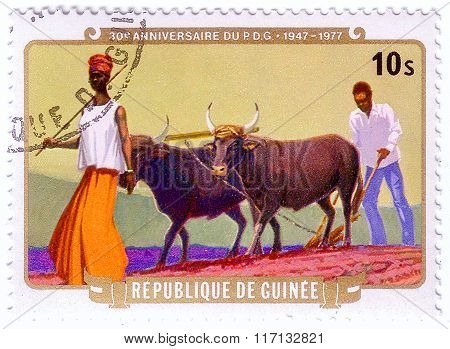Guinea - Circa 1977: A Stamp Printed In Republic Of Guinea Shows Farmers Plowing With Yaks,the 30Th