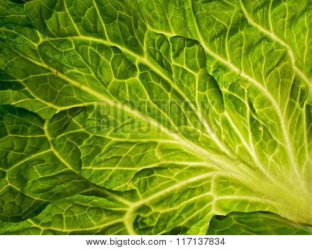 Green Leaf, Texture Or Background