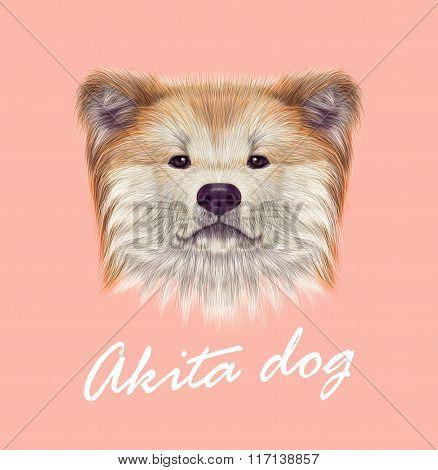 Akita Inu Japanese Dog.