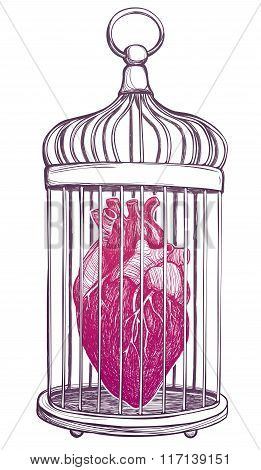 Birdcage with anatomical heart.