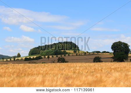 Beautiful Landscape With Hill, Grain Field And Blue Sky In Saxon Switzerland