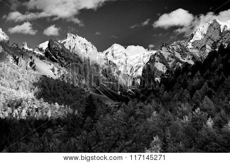 Mountain With Snow And Pine Forest In Black And White