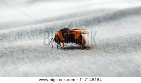 Colorful Bumblebee on a textile
