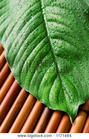 Groene blad