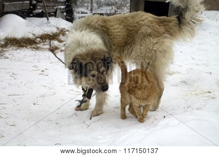 Two Friends, Cat And Dog