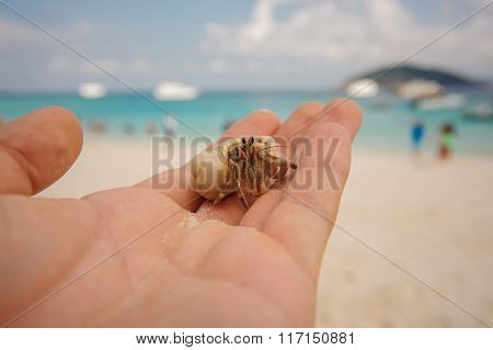 Diogenes-crab Hermit , Pagurian, Soldier Crab On  Male Hand
