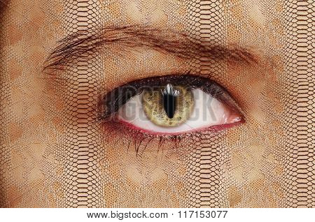 intermediate form of creatures eye