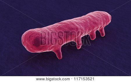 Under The Microscope, Salmonella Bacterium
