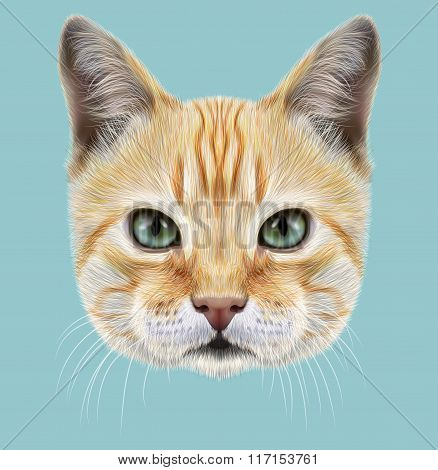 Red Cat. Illustrated Portrait