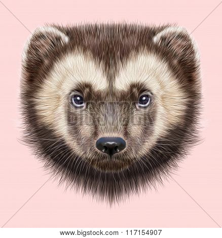 Wolverine Animal. Illustrated Portrait