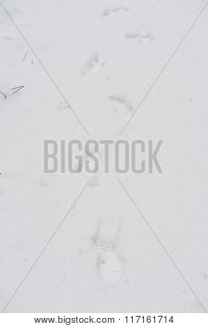 Animal track in the snow