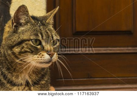 Closeup of a domestic cat