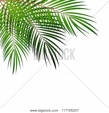 Palm Leaf Vector Background Illustration