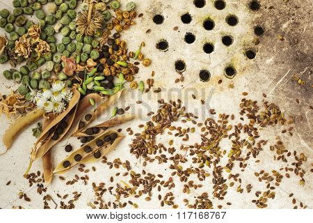 surface of the old sink with seeds and peas
