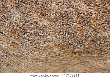 Brown Of Animals Skin And Fur.
