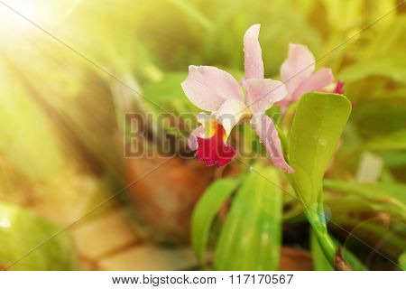 Colorful fully grown orchid in greenhouse