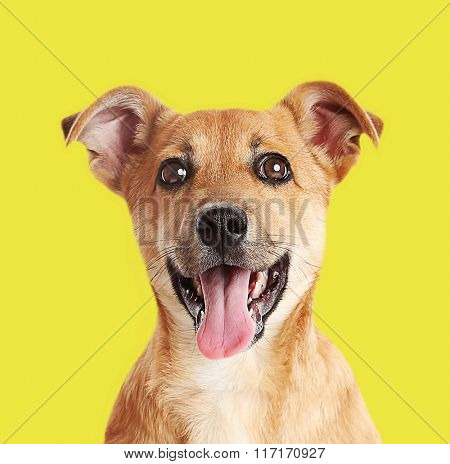 Little cute puppy on yellow background