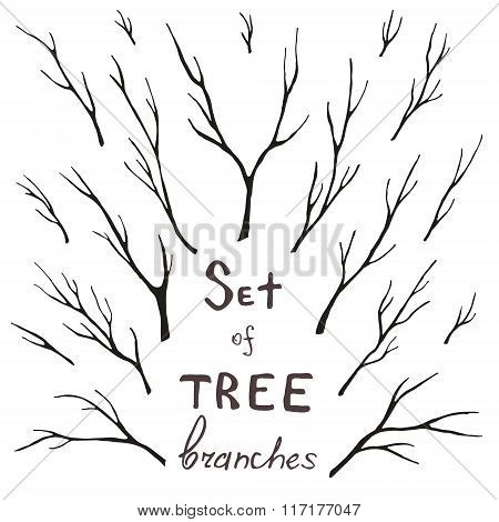 Vector set of tree branches trunk twig stem. Hand-drawing eco design for frames decoration greeting