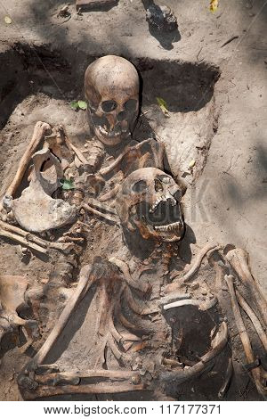 Two skeleton. Archeology