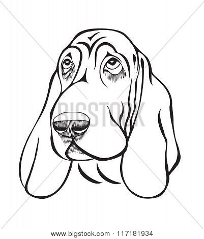 Dog Breed Basset Head